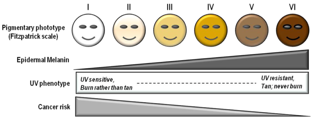 fitzpatrick scale with uv.png